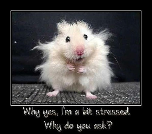 stress mouse